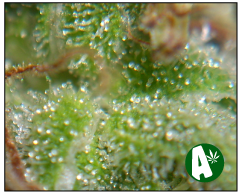 Medical and Recreational Marijuana Dispensaries